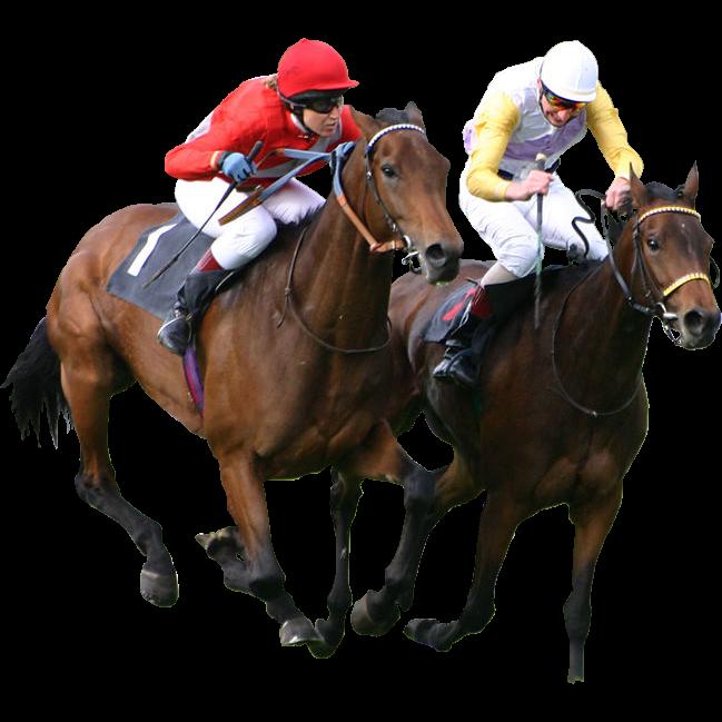 Horse Racing-hdhut.blogspot.com (4)